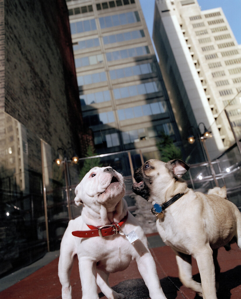 New York City Dogs