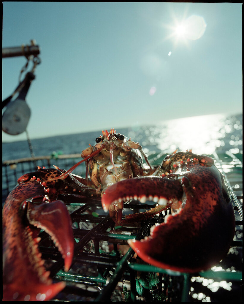 Lobster Fishing